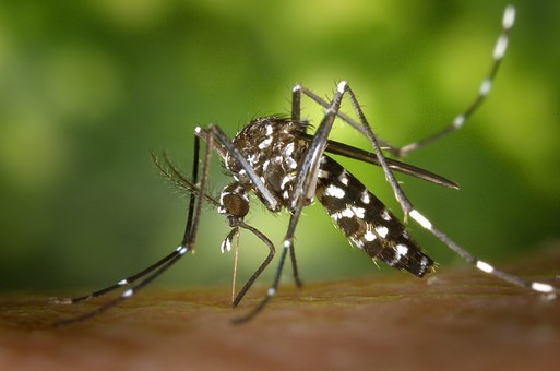 Homemade mosquito traps